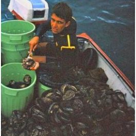 John Haslam on the early Abalone industry
