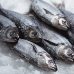 Mures Fishing – Diana's Catch
